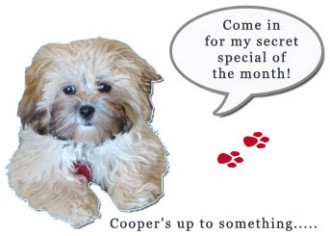 Cooper our store dog - monthly specials